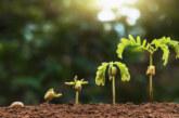 Ботаници откриха над 100 нови вида растения