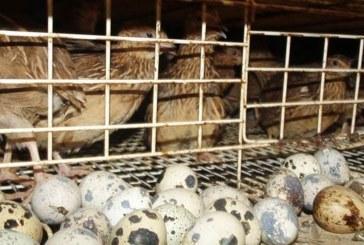 Фермер от Бунцево наказан да върне 24 477 лв. европомощ за пъдпъдъци