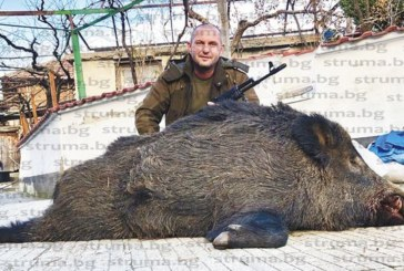 Брежанските ловци нямат празно, собственик на тирове гръмна 180-кг прасе с 2 изстрела