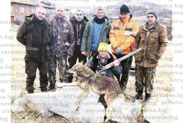 БОРБА ЗА ЖИВОТ! Вълчица с пробит от куршуми череп търси спасение в скалите на Кресненското дефиле, 11 ловци я издирват