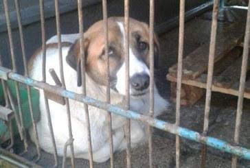 """Акция """"Осиновяване"""" стартира предколедно общинският приют за кучета в Дупница"""