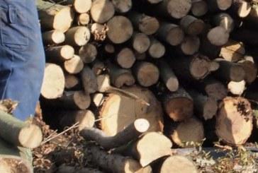 Мъж загина при рязане на дърва в Благоевградско