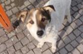 Гражданско сдружение прави спасителен център за кучета върху общинска нива край Бело поле