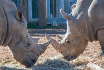 Голяма паника в зоопарк! 2-г. дете падна в клетка на носорози