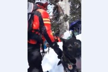 Вижте как планински спасители с кучета издирват затрупаните от лавината в Банско
