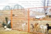 Природозащитници струпаха над 300 кучета в нерегистриран приют в имот на руснак в Невестинско, нападат хора и домашни животни