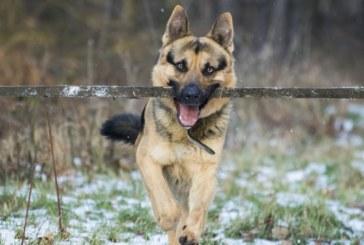 Разбра се на кого са застреляните кучета в Раздол