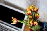 Растенията в офиса намаляват с 20% заболеваемостта на служителите