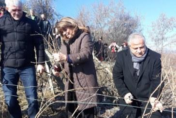 Вицепрезидентът Илияна Йотова гост на празника на виното в село Делчево