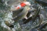 Отстранен от ОбС за конфликт на интереси разложки съветник пълни стопанство с 900 000 рибки, фирмата му снабдява социални и детски заведения
