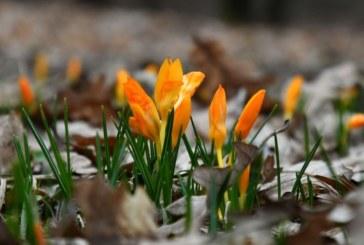 Слънчев 8-ми март, живакът удря 24°