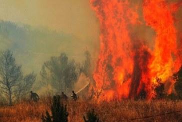 Три пожара горяха в Пернишко, огънят изпепели 80 дка борова гора