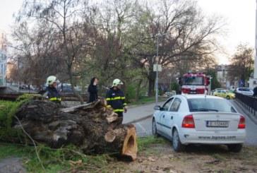 Огромно дърво се сгромоляса на улица в Благоевград