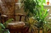 Как влияят стайните растения на здравето