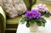 Стайните цветя пазят от отрови, излъчвани от мебелите
