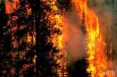 """ОГНЕН АД! Голям горски пожар бушува в района на """"ДГС Първомай"""""""