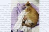 Зверска жестокост! Младежи потресоха Радомир, малтретирайки бременна котка