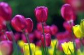 Топъл април се задава! Жега на Цветница, но дъжд по Великден
