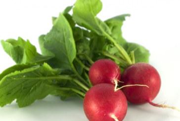 Драстично паднаха изкупните цени на ранните зеленчуци в Санданско