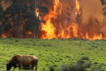 Силен вятър разпалва горски пожари в Испания