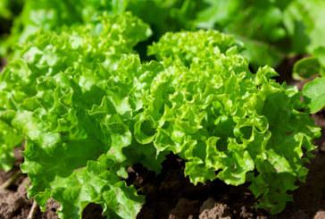 5 причини да си направим салата от маруля