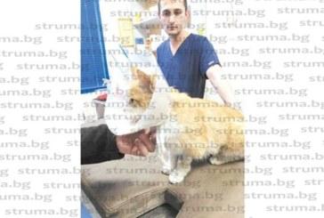 ЧОВЕЩИНА! Радомирци събраха 1227 лева за лечение на пребитата от пияни младежи бременна котка