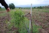 Стопанин от Кюстендил се видя в чудо! Някой изсече 350 фиданки от нивата му