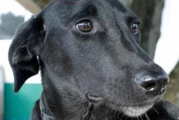 Осиновено българско куче  в Германия загина, за да спаси стопанката си от зловещ пожар