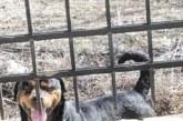 Ротвайлерът на бащата на Валери Божинов тормози цяло село, разкъсва кучета, напада хора