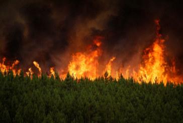 Огнеборци гасиха 17 пожара в Кюстендилско