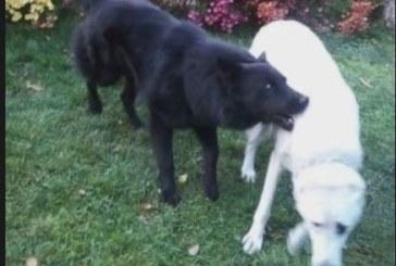 Куче нахапа жестоко дете пред очите на дядо му