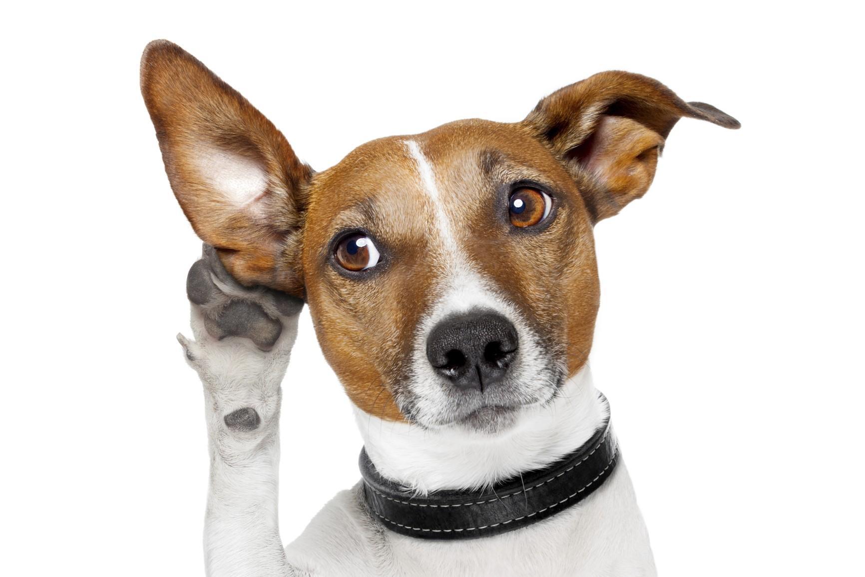 Над 500 кюстендилци платиха такса куче от 1 ст.