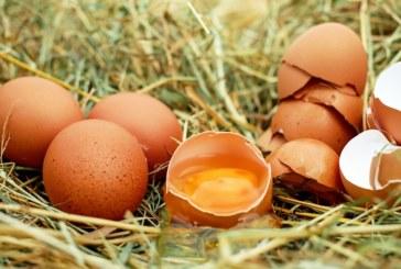 Народен илач с кокоше яйце спасява от шипове