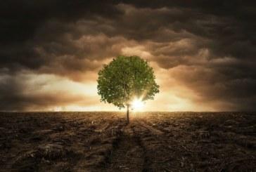 Откриха дърво на 2624 години в САЩ
