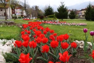 """За поредна година Община Банско стартира традиционния конкурс """"Красивите градини на Банско"""""""