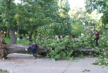Дърво се строполи върху пейка в градска градина