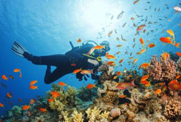 Учени откриха непознати видове морски създания