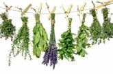 Кои билки се берат през май