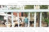 Жители на радомирско село излязоха на протест срещу съседка и 40 кучета