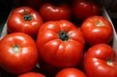 Вносният домат убива родното производство