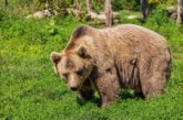 Мъж живял в бърлогата на ранилата го мечка, пазела го като хрантелен запас
