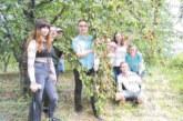 Кюстендилци отведоха американски студенти музиканти да берат череши