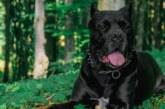 Куче на задържания от Владо Тричков отхапало палец на момиче