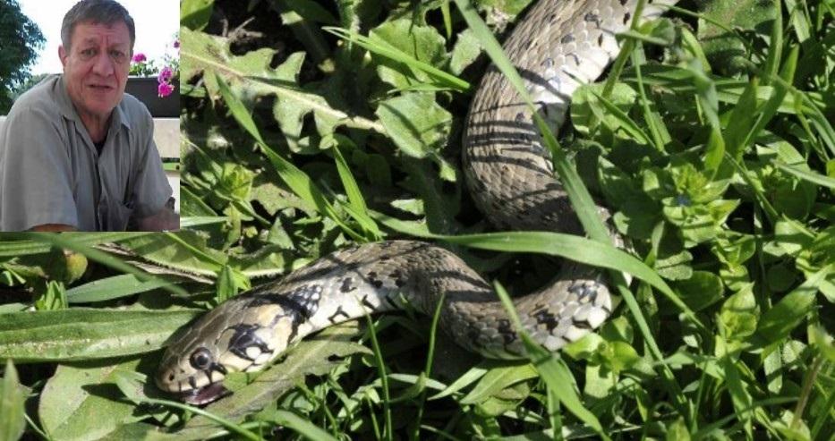 Експерт съветва: Ето какво да правим, ако ни ухапе змия