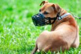 Глобяват с 1000 лева за куче без намордник