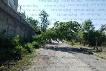 Буря повали дървета и остави част от Дупница на тъмно