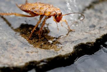 Хлебарките бягат от дафинов лист
