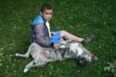 Депутатите обсъждат забраната за свободно разхождане на кучета