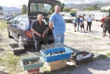 Стопани на животинския пазар в Благоевград: Всички истории с болестите по животните са политика да се затрие животновъдството в България, сега са прасетата, лани бяха овцете, наесен ще обявят, че има птичи грип…