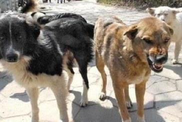 Страшен инцидент в Рилци! Глутница кучета разкъса жена